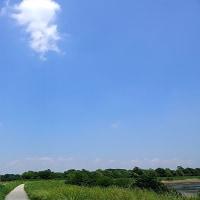 散歩道・芝川第一調節池