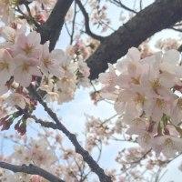 桜が咲く季節
