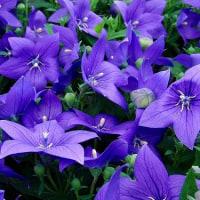 アヤメと紫の花いろいろ