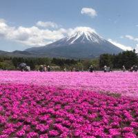 富士芝桜見物に