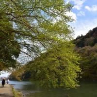 京都、嵐山ラストp6(D810、18-35mm)