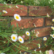 朴竜の野辺の花々を愛しむ 30