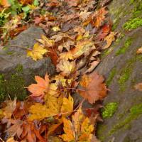 2016/10/24(月) 称名滝の紅葉は