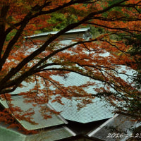 東予方面の紅葉めぐり H28