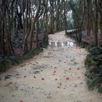 雨の笠山観光