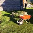夏の庭仕事 つづき