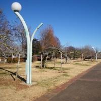 わんぱく公園