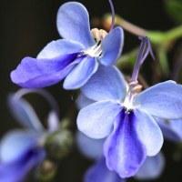 4/18 今日の花たち