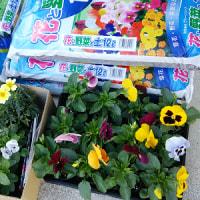 花と戦闘機