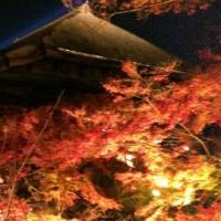 京都の紅葉ライトアップデビュー