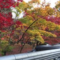 京都の秋 ~ 永観堂