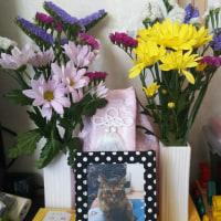 お花を買ってきたよ(о´∀`о)