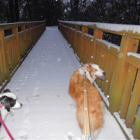 寒波そして雪