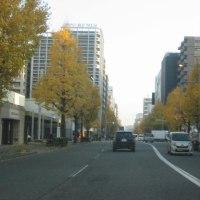 福岡都心の黄葉