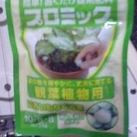 サボテン用にハイポネックスジャパン、プロミック錠剤肥料っ!><