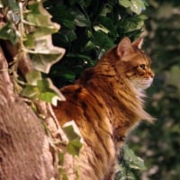 トラ猫喫茶とフクロウの森いってきたよ