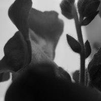 どんな種子どんな花