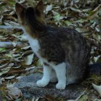 庭猫 372