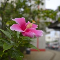 沖縄・11月の首里 写真30枚