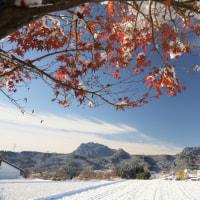 雪の朝、動揺する撮影
