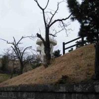 アサリと穴子がおいしかった 富津岬:千葉県富津市