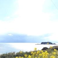 菜の花と江ノ島