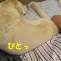 フィラリア薬 モキシデック?~☆