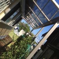 茨城 ポリカーボネート熱線吸収屋根 テラスとカーポート屋根張り替え作業