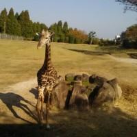 平川動物公園🐨