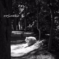猫の森での出会い