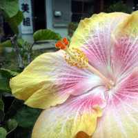西表 海に舞う花