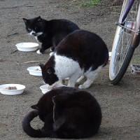 公園猫と敷地猫ちゃん 2017 0317