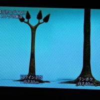 2/27 この大きなシダ系の植物が全部石炭になった
