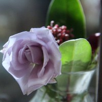 ラブリーブルーのお花と球根たち