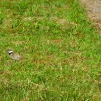 今日の野鳥風景。(6/22*木)