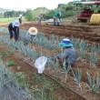 2017年7月22日(土) 秋冬野菜の畑づくり