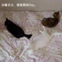 開放Day
