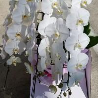 6月21日 明日の誕生花・ゆかりの花 花言葉は?(*^O^*)☆