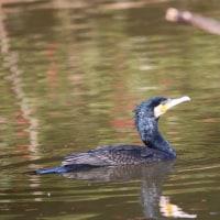 庄内緑地公園の鳥たち