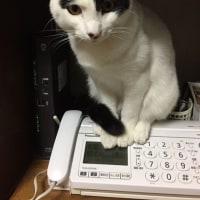 くーさん、電話の上に乗る