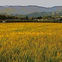 ノスタルジック麦畑