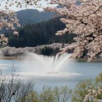 桜満開の土師ダム