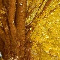 黄金色の大イチョウ