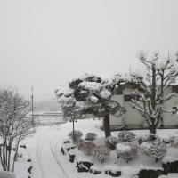 大雪になりました