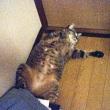 同じ姿でころがってる夏のネコ