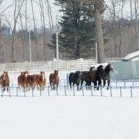 十勝牧場の馬追い・・1