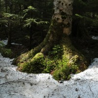 北八ツ・苔の森