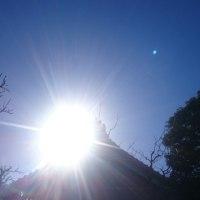 朝の陽光に。