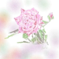 ☆薔薇(バラ)のイラストが懐かしい。