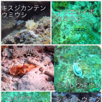 石垣島の魚たち